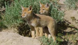 judith-lehmberg-yellowstone-babies.jpg