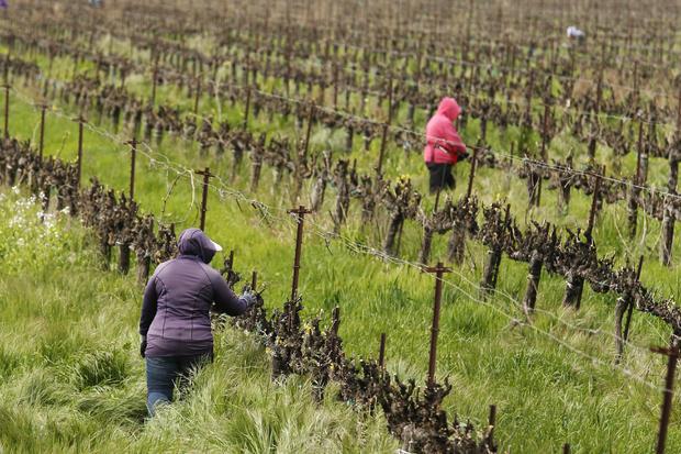 Virus Outbreak California Farmers