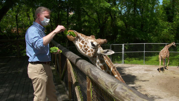 memphis-zoo-feeding-giraffe-620.jpg