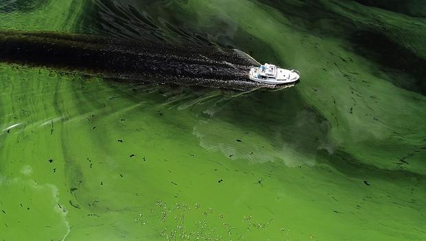 climate change toxic algae