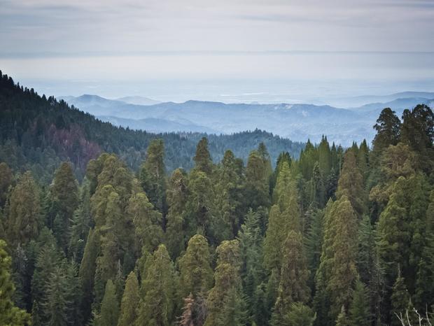 Sequoia National Park in California