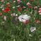 flowers-in-martha-stewart-garden-a-1280.jpg