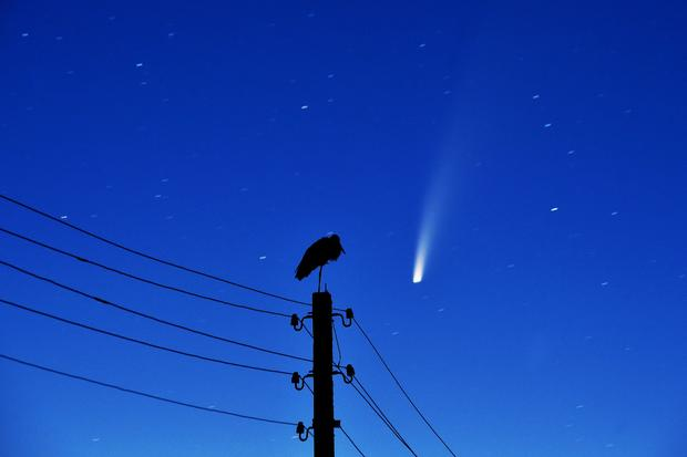 TOPSHOT-BELARUS-ASTRONOMY-ANIMAL