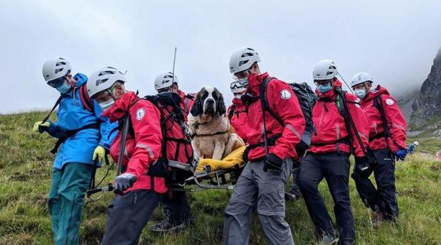 scafell-pike-dog-rescue-01.jpg