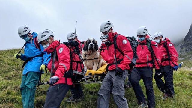 scafell-pike-dog-rescue-01.jpg