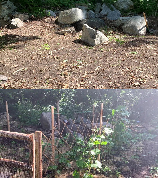 gaffigan-second-garden-before-and-after.jpg