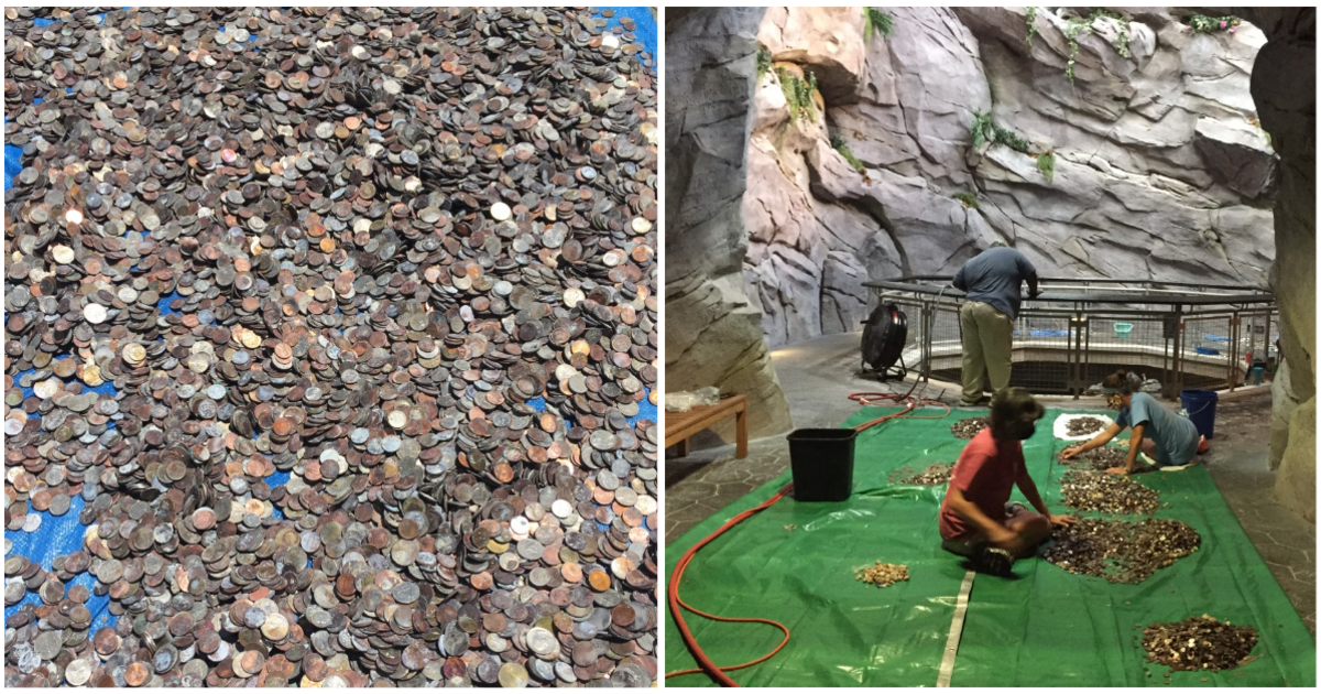 This aquarium has been closed for almost five months. Now, it's using old wishing coins to help care for its animals.