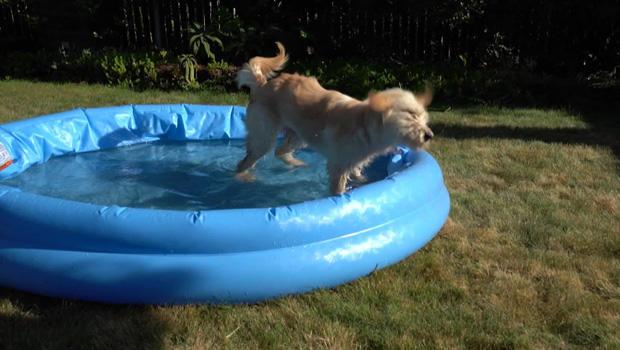 tumble-in-a-kiddie-pool-620.jpg