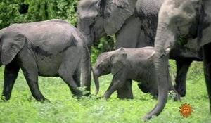 elephants-d1920-536149-640x360.jpg