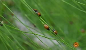 nature-ladybugs1920-538883-640x360.jpg