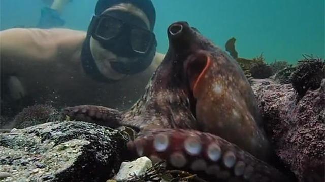 my-octopus-teacher-660.jpg