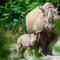 Rhino baby at Magdeburg Zoo