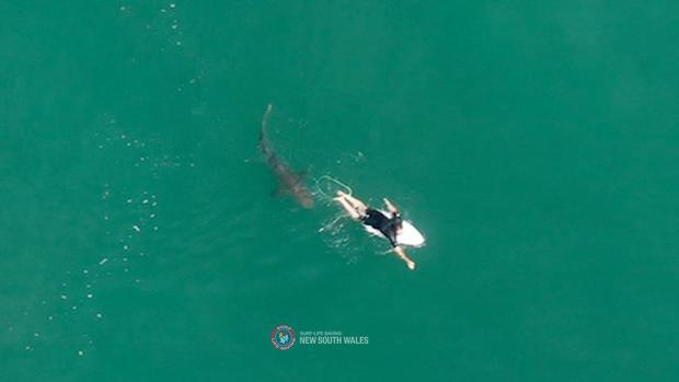 A shark swims close to World championship tour surfer Matt Wilkinson World at Sharpes Beach, New South Wales