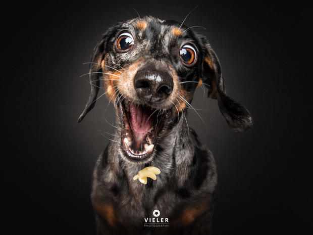 Just 54 photos of dogs getting treats