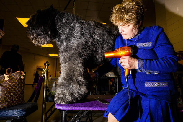 Inside The 143rd Westminster Kennel Club Dog Show
