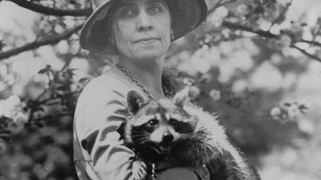 coolidge-white-house-rebecca-raccoon-loc-1280.jpg