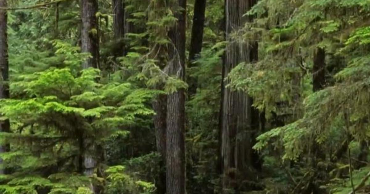 How trees communicate with one another using a complex subterranean system of fungi and roots