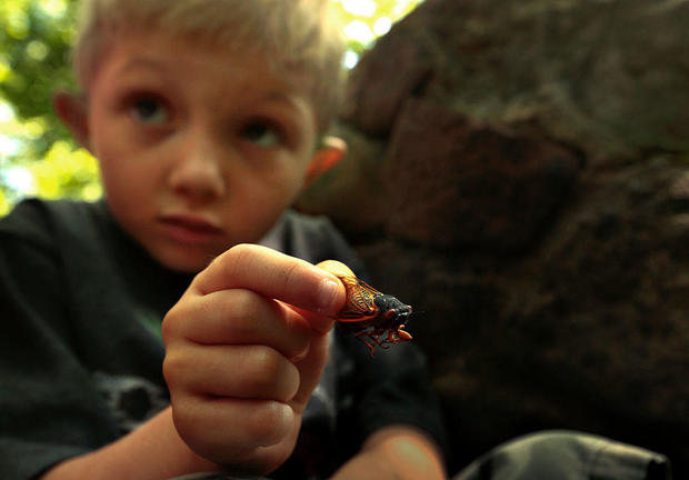 Six-year-old Aren Kempf, of Staten Island, holds a dead cicada bug he collected and plans to take h