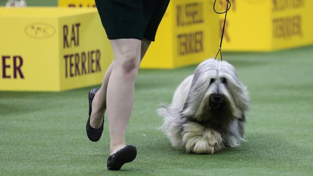 143rd Annual Westminster Kennel Club Dog Show