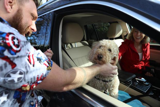 """Veterinarians Flooded As """"Dog Flu"""" Sweeps Across U.S."""