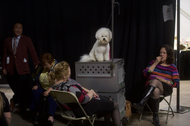 17th Annual National Dog Show