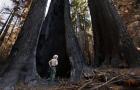 Big Basin Redwoods State Park, San Jose, California, wildfire.