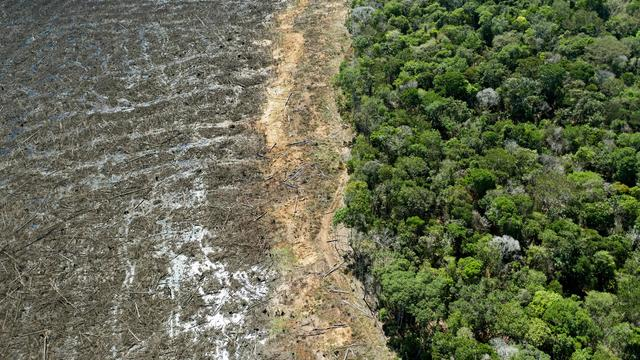 BRAZIL-ENVIRONMENT-DEFORESTATION