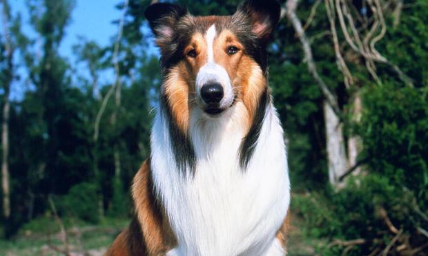 fave_lassie