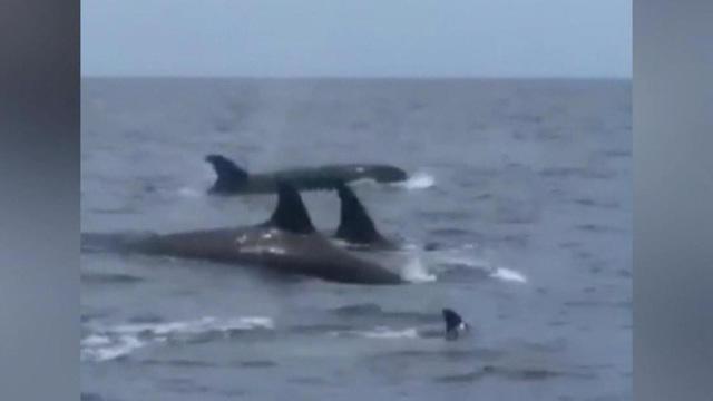 ctm-0527-orcas-1069650-640x360.jpg