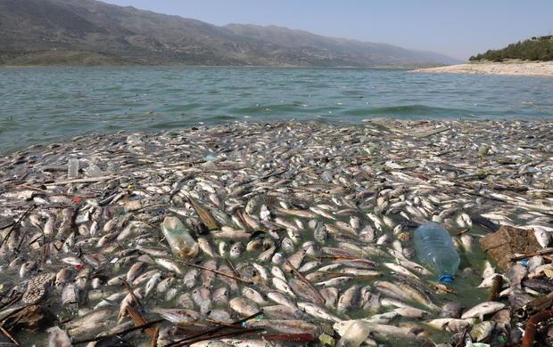 Dead fish are seen floating in Lake Qaraoun on the Litani River