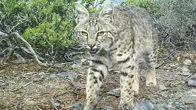 0801-newspath-wildlife-1365644-640x360.jpg