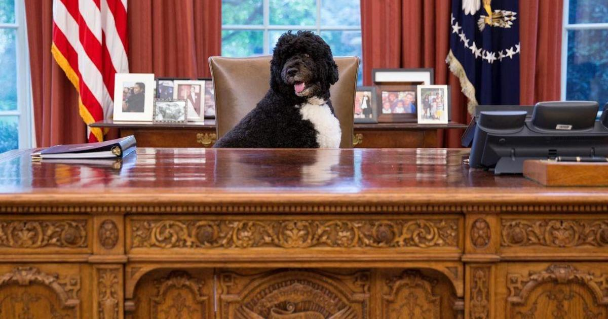 Bo, the Obama's family dog, dies of cancer