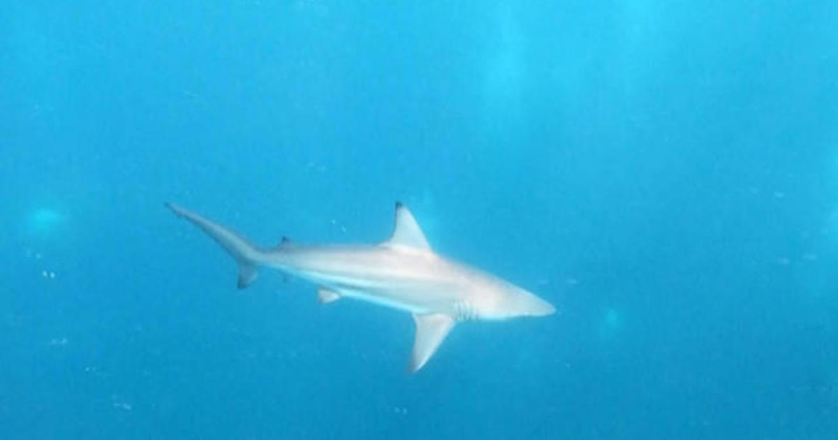 Great white shark sightings in South Africa becoming increasingly rare