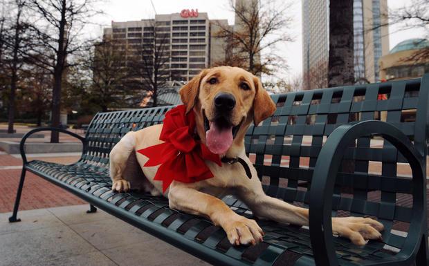 """Marley, the Dog from """"Marley and Me"""", Visits Various Atlanta Landmarks"""