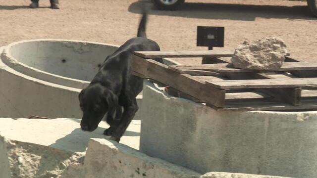 search-dogs-790909-640x360.jpg
