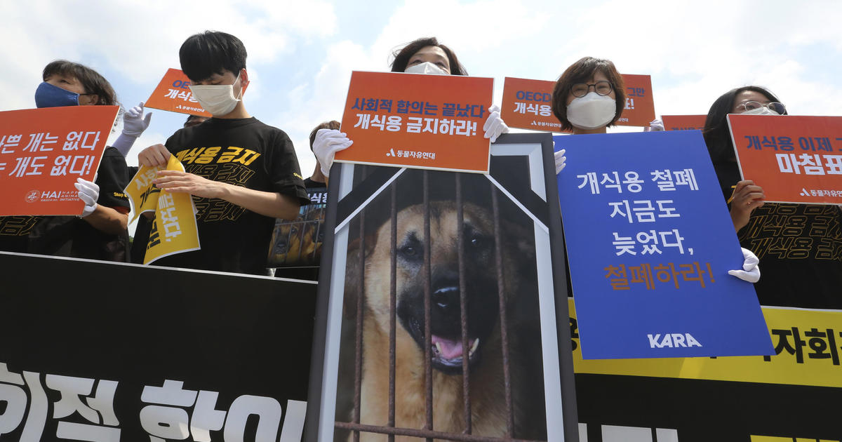 """South Korea's president raises ban on eating dog meat: """"Hasn't the time come?"""""""