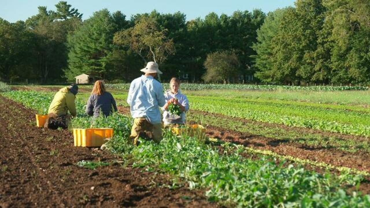 """Going Back in Time: Why some young workers are leaving their office jobs to work on farms: """"This is how I want my life to go"""""""