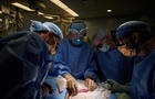 carrotta-nyu-xenotransplant-233.jpg